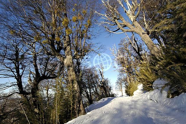 ea054832LE : Cerro Catedral, Bariloche, Patagonie.  Amérique du sud, Amérique Latine, Amérique, route, C02, C01 arbre, moyenne montagne, paysage, voyage aventure (Argentine).