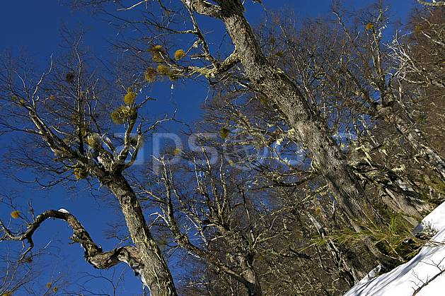 ea054835LE : Cerro Catedral, Bariloche, Patagonie.  Amérique du sud, Amérique Latine, Amérique, C02, C01 arbre, moyenne montagne, voyage aventure (Argentine).