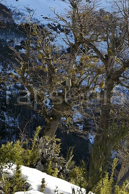 ea054838LE : Cerro Catedral, Bariloche, Patagonie.  Amérique du sud, Amérique Latine, Amérique, C02, C01 arbre, moyenne montagne, paysage, voyage aventure (Argentine).