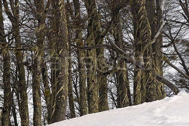 ea054846LE : Cerro Catedral, Bariloche, Patagonie.  Amérique du sud, Amérique Latine, Amérique, mousse, C02, C01 arbre, moyenne montagne, voyage aventure (Argentine).