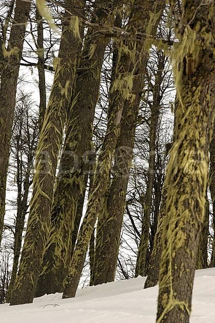 ea054850LE : Cerro Catedral, Bariloche, Patagonie.  Amérique du sud, Amérique Latine, Amérique, mousse, C02, C01 arbre, moyenne montagne, voyage aventure (Argentine).