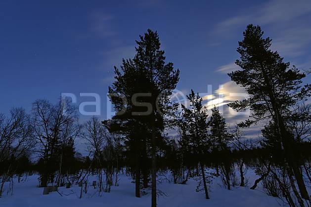 ea061431LE : Nuit en Laponie.  Europe, CEE, nuit, lumière, C02, C01 forêt, paysage, voyage aventure (Finlande).