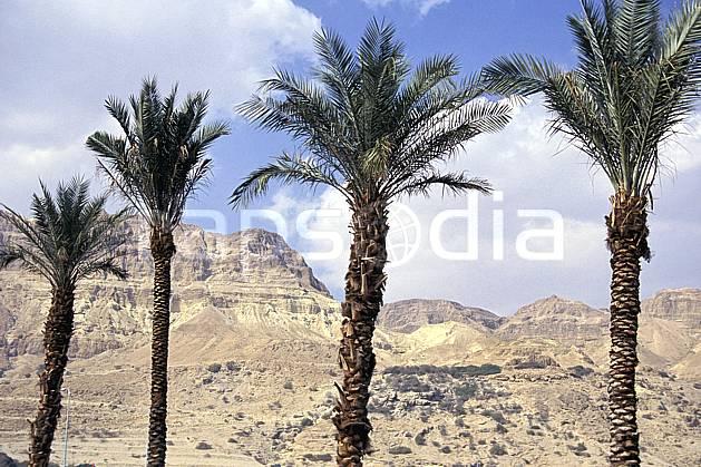ea1133-36LE : Palmiers.  Proche Orient, ciel nuageux, palmier, C02, C01 arbre, désert, paysage, voyage aventure (Israël).