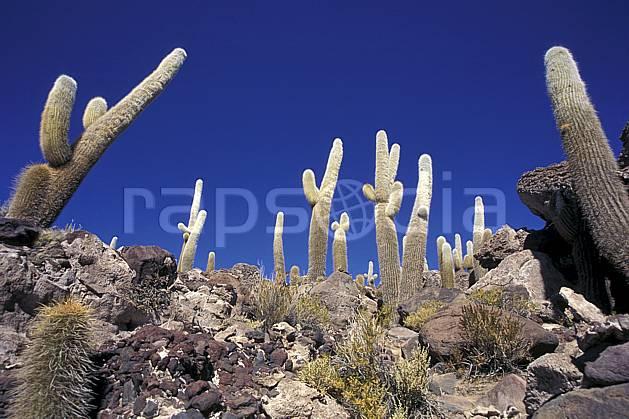 ea1218-25LE libre de droits Sud Lipez, Ile Pescado, Amérique du sud, Amérique Latine, Amérique, cactus, ciel bleu, C02, C01, désert, paysage, voyage aventure (Bolivie).