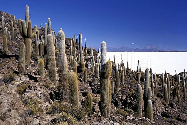 ea1218-31LE libre de droits Sud Lipez, Ile Pescado, Amérique du sud, Amérique Latine, Amérique, cactus, ciel bleu, désert de sel, C02, C01, désert, paysage, voyage aventure (Bolivie).