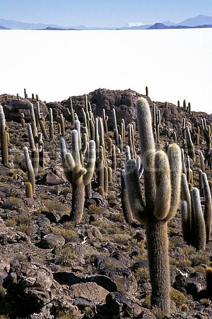 ea1218-33LE libre de droits Sud Lipez, Ile Pescado, Amérique du sud, Amérique Latine, Amérique, cactus, désert de sel, C02, C01, désert, paysage, voyage aventure (Bolivie).