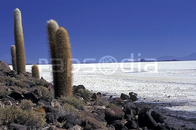 ea1219-30LE libre de droits Désert de sel, Uyuni, Sud Lipez, Amérique du sud, Amérique Latine, Amérique, cactus, ciel bleu, désert de sel, C02, C01, désert, paysage, voyage aventure (Bolivie).