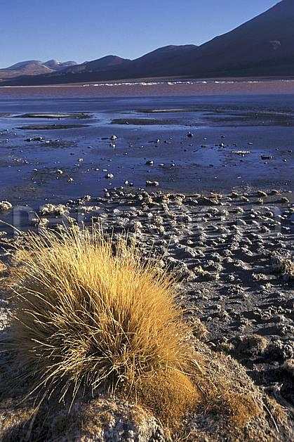 ea1223-35LE : Sud Lipez.  Amérique du sud, Amérique Latine, Amérique, buisson, ciel bleu, laguna, lagune, C02, C01 désert, lac, paysage, voyage aventure (Bolivie).