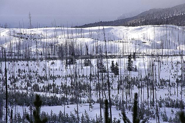 ea1984-03LE : Grand Teton National Park, Wyoming.  Amérique du nord, ciel nuageux, C02, C01 arbre, paysage, voyage aventure (Usa).
