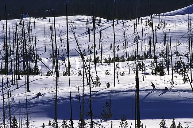 ea2007-13LE : Elke National Refuge, Jackson, Wyoming.  Amérique du nord, C02, C01 arbre, lac, paysage, voyage aventure (Usa).