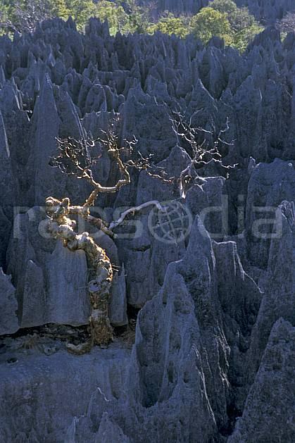 ea2274-19LE : Les Tsingy de Bemaraha.  Afrique, Afrique de l'est, chaos, tsingy, érosion, C02, C01 arbre, paysage, voyage aventure (Madagascar).