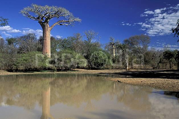 ea2278-11LE : Morondava.  Afrique, Afrique de l'est, baobab, ciel bleu, C02, C01 arbre, paysage, rivière, voyage aventure (Madagascar).