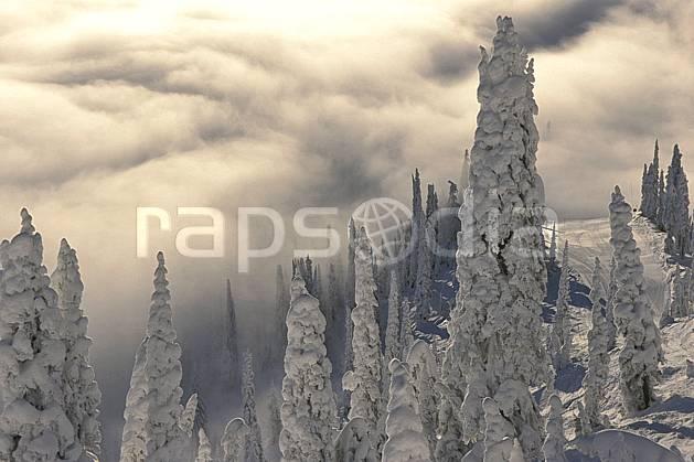 ea2603-33LE : Forêt enneigée, Colombie Britannique.  Amérique du nord, Amérique, ciel nuageux, sapin, C02, C01 arbre, forêt, paysage, voyage aventure (Canada).