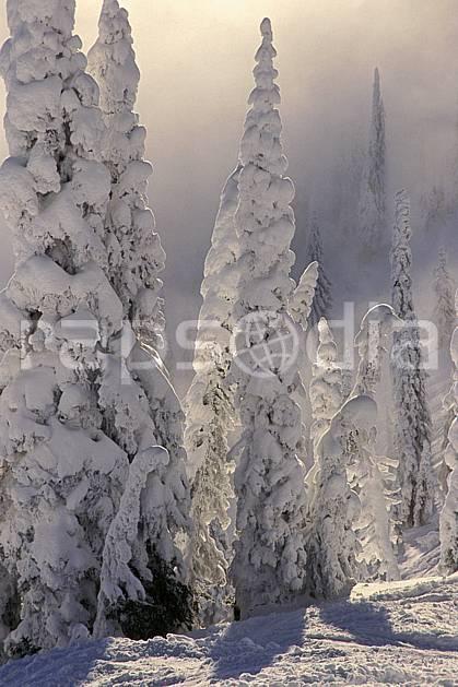 ea2603-34LE : Forêt enneigée, Colombie Britannique.  Amérique du nord, Amérique, ciel nuageux, sapin, C02, C01 arbre, paysage, voyage aventure (Canada).