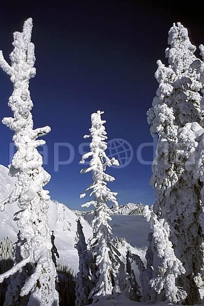 ea2604-27LE : Forêt enneigée, Colombie Britannique.  Amérique du nord, Amérique, ciel bleu, sapin, C02, C01 arbre, paysage, voyage aventure (Canada).