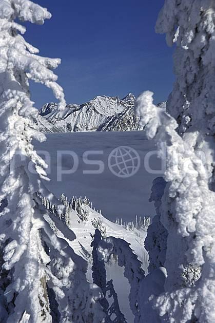 ea2604-28LE : Forêt enneigée, Colombie Britannique.  Amérique du nord, Amérique, ciel bleu, sapin, C02, C01 arbre, paysage, voyage aventure (Canada).