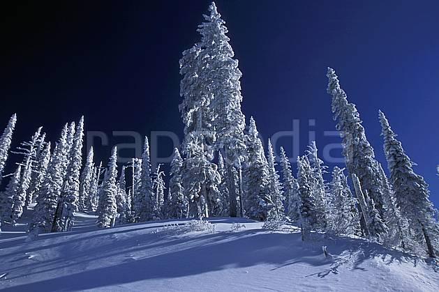 ea2605-15LE : Forêt enneigée, Colombie Britannique.  Amérique du nord, Amérique, ciel bleu, sapin, C02, C01 arbre, forêt, paysage, voyage aventure (Canada).