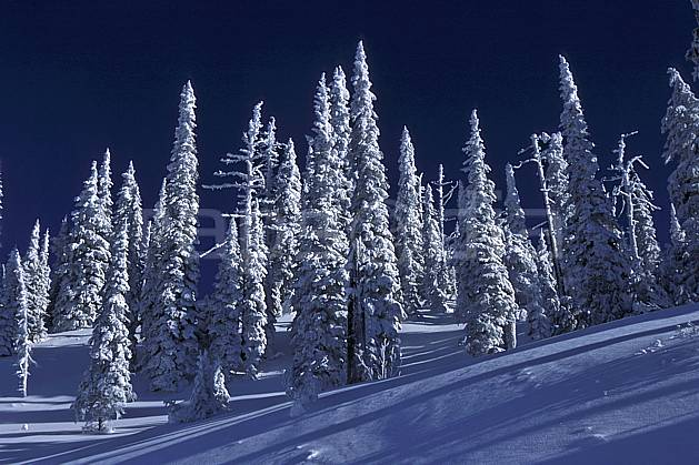 ea2605-16LE : Forêt enneigée, Colombie Britannique.  Amérique du nord, Amérique, ciel bleu, sapin, C02, C01 arbre, forêt, paysage, voyage aventure (Canada).