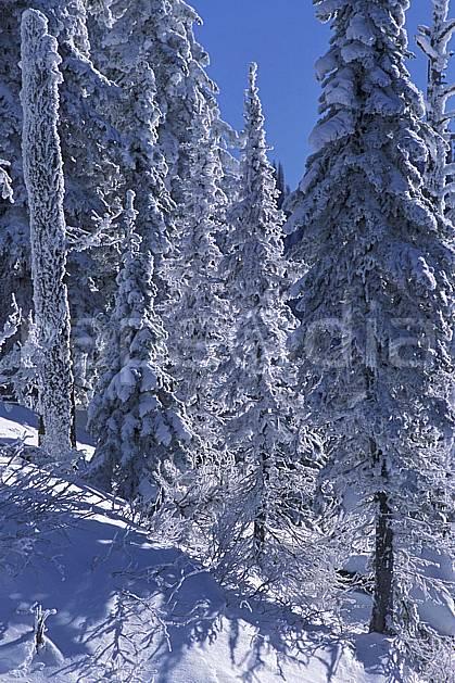 ea2605-28LE : Forêt enneigée, Colombie Britannique.  Amérique du nord, Amérique, ciel bleu, sapin, C02, C01 arbre, forêt, paysage, voyage aventure (Canada).