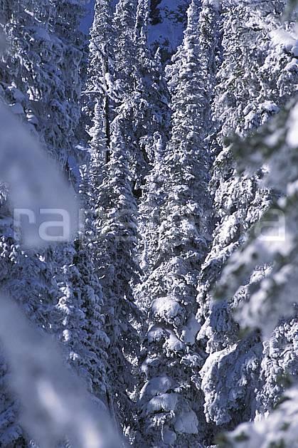 ea2605-30LE : Forêt enneigée, Colombie Britannique.  Amérique du nord, Amérique, sapin, C02, C01 arbre, forêt, paysage, voyage aventure (Canada).