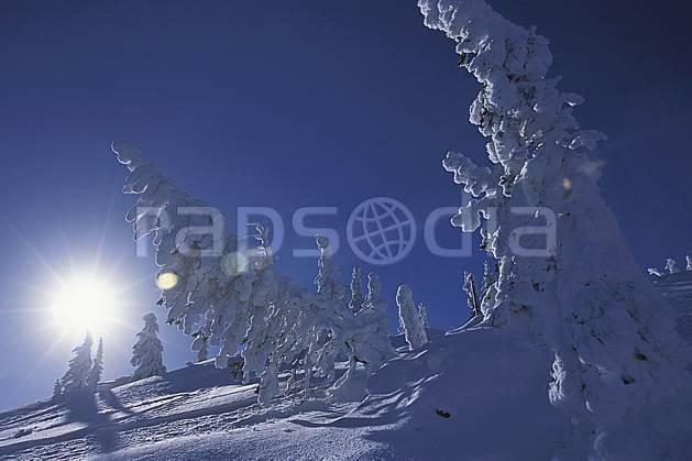 ea2606-15LE : Forêt enneigée, Colombie Britannique.  Amérique du nord, Amérique, ciel bleu, sapin, C02, C01 arbre, paysage, soleil, voyage aventure (Canada).