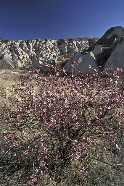 ea2651-15LE : Anatolie Centrale, Cappadoce.  Europe, ciel bleu, fleur, fleur rose, érosion, C02, C01 arbre, flore, paysage, voyage aventure (Turquie).