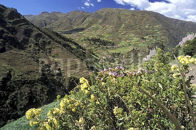 ea2711-26LE : Au dessus de Chavin.  Amérique du sud, Amérique Latine, ciel nuageux, fleur, fleur violette, C02, C01 flore, paysage, voyage aventure (Pérou).