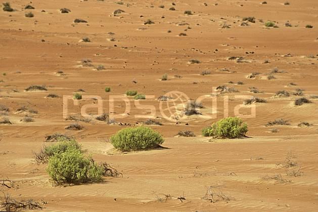 ea2849-06LE : Arabie Saoudite.  Afrique, Moyen Orient, buisson, C02, C01 désert, paysage, voyage aventure (Arabie-Saoudite).