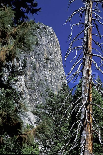 ea2864-37LE : Big wall, Yosemite, Californie.  Amérique du nord, ciel bleu, falaise, parc américain, sapin, C02, C01 arbre, paysage, voyage aventure (Usa).