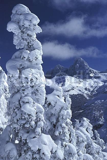 ea2937-32LE : Grand Targhee, Grand Teton, Wyoming.  Amérique du nord, ciel bleu, sapin, C02, C01 arbre, moyenne montagne, paysage, voyage aventure (Usa).
