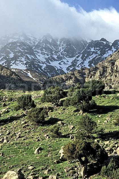ea3142-19LE : Trek Maroc.  Afrique, Afrique du nord, mauvais temps, C02, C01 arbre, moyenne montagne, paysage, voyage aventure (Maroc).