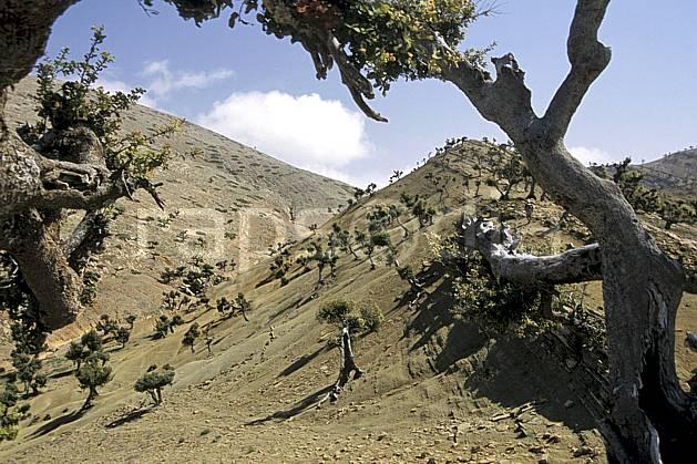 ea3165-01LE : Trek Maroc.  Afrique, Afrique du nord, C02, C01 arbre, désert, moyenne montagne, paysage, voyage aventure (Maroc).