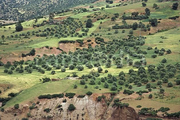 ea3166-04LE : Trek Maroc.  Afrique, Afrique du nord, champ, C02, C01 arbre, forêt, moyenne montagne, paysage, voyage aventure (Maroc).