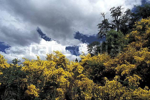 ea3183-04LE : Patagonie.  Amérique du sud, Amérique Latine, Amérique, fleur, C02, C01 flore, forêt, moyenne montagne, nuage, paysage, voyage aventure (Argentine).