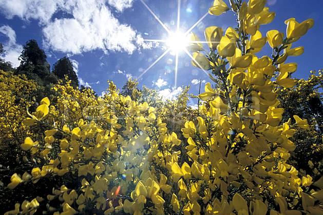 ea3183-05LE : Patagonie.  Amérique du sud, Amérique Latine, Amérique, fleur, C02, C01 flore, moyenne montagne, paysage, soleil, voyage aventure (Argentine).