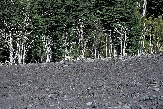 ea3186-04LE : Patagonie.  Amérique du sud, Amérique Latine, Amérique, C02, C01 arbre, forêt, moyenne montagne, paysage, voyage aventure (Argentine).