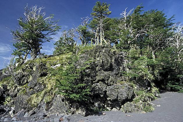 ea3186-09LE : Patagonie.  Amérique du sud, Amérique Latine, Amérique, C02, C01 arbre, forêt, moyenne montagne, paysage, voyage aventure (Argentine).