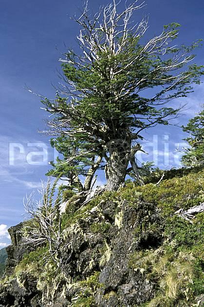 ea3186-10LE : Patagonie.  Amérique du sud, Amérique Latine, Amérique, C02, C01 arbre, moyenne montagne, paysage, voyage aventure (Argentine).