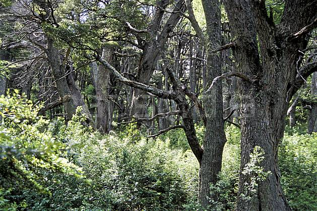 ea3196-08LE : Patagonie.  Amérique du sud, Amérique Latine, Amérique, C02, C01 arbre, forêt, moyenne montagne, paysage, voyage aventure (Argentine).