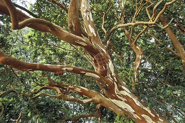 ea3197-23LE : Patagonie.  Amérique du sud, Amérique Latine, Amérique, écorce, C02, C01 arbre, paysage, voyage aventure (Argentine).