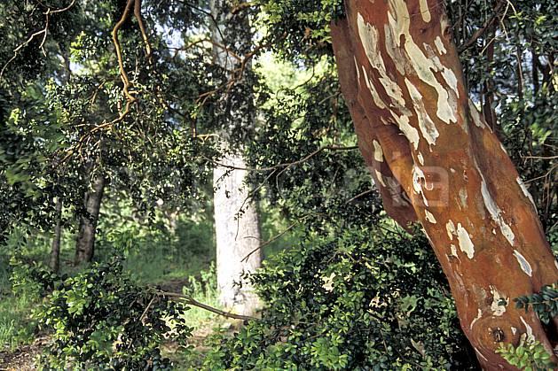 ea3197-27LE : Patagonie.  Amérique du sud, Amérique Latine, Amérique, écorce, C02, C01 arbre, paysage, voyage aventure (Argentine).