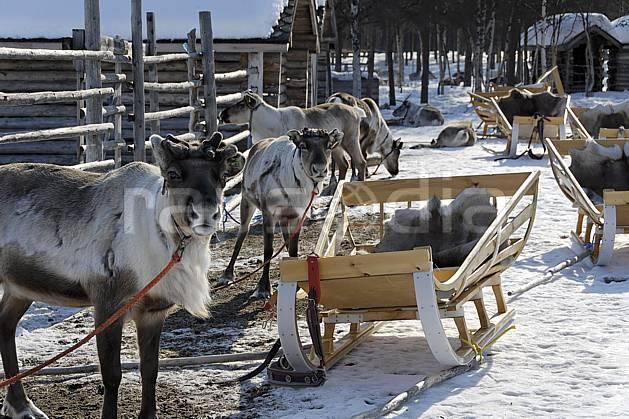 ec061551LE : Ferme à rennes, Vuotso, Laponie.  Europe, CEE, traineau, renne, C02, C01 faune, personnage, voyage aventure (Finlande).