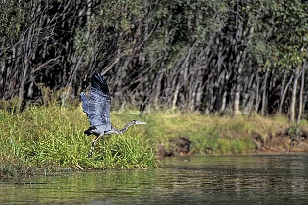 ec0671-06LE : Héron, Yosemite NP, California.  Amérique du nord, oiseau, parc américain, C02, C01 faune, lac, voyage aventure (Usa).