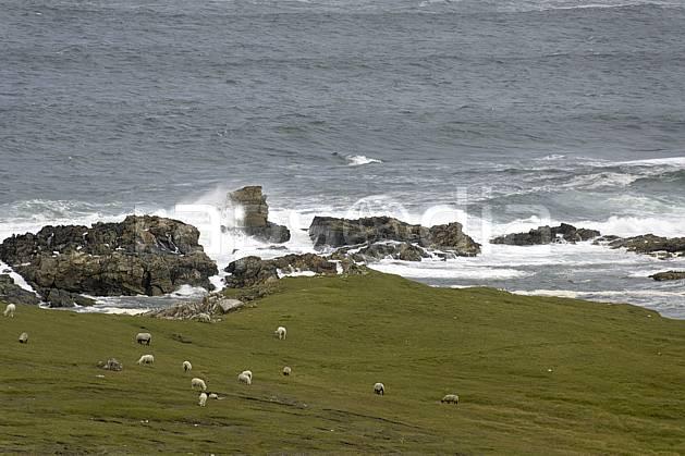 ec071989LE : Donegal.  Europe, CEE, littoral, mouton, vague, C02 faune, mer, paysage, voyage aventure (Irlande).
