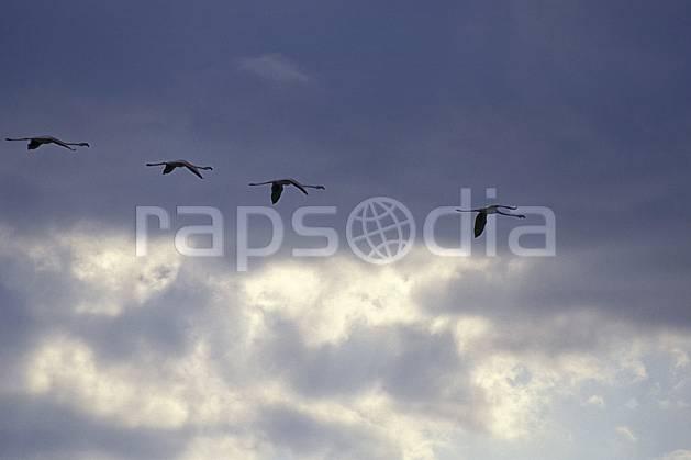 ec1192-30LE : Flamants rose, Camargue.  Europe, CEE, ciel nuageux, oiseau, C02, C01 faune, groupe, nuage, voyage aventure (France).