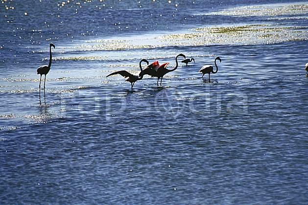 ec1192-35LE : Flamants rose, Camargue.  Europe, CEE, oiseau, C02, C01 faune, groupe, lac, voyage aventure (France).