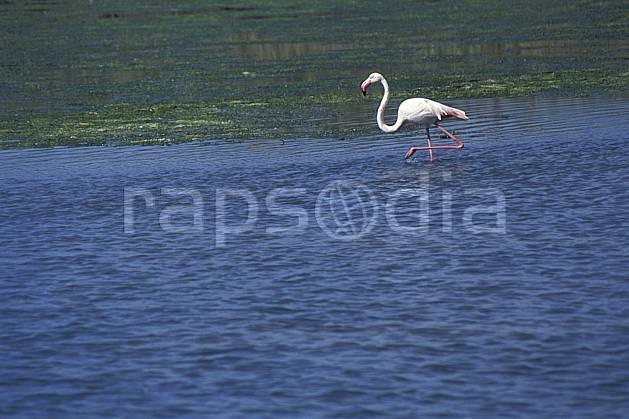ec1193-04LE : Flamants rose, Camargue.  Europe, CEE, oiseau, C02, C01 faune, lac, voyage aventure (France).