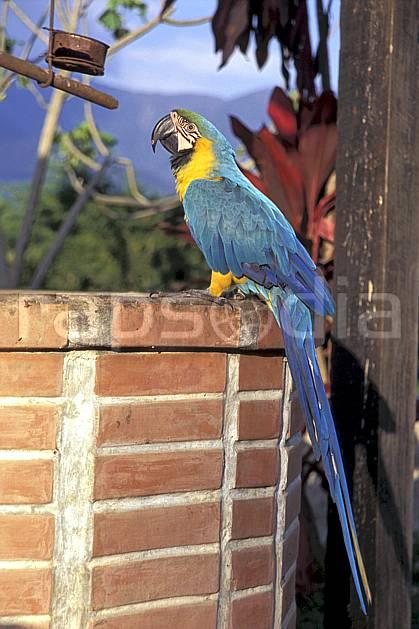 ec1215-29LE : Péroquet, Coroïco.  Amérique du sud, Amérique Latine, Amérique, oiseau, C02, C01 environnement, faune, voyage aventure (Bolivie).