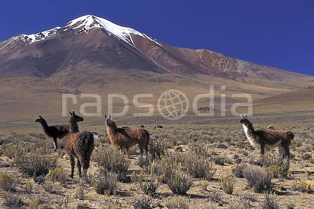 ec1220-18LE : Lamas, Sud Lipez.  Amérique du sud, Amérique Latine, Amérique, ciel bleu, C02, C01 faune, groupe, paysage, voyage aventure (Bolivie).
