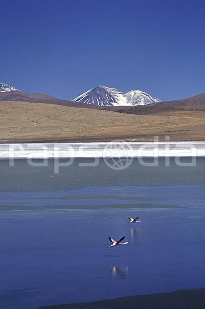 ec1220-27LE : Flamants rose, Sud Lipez.  Amérique du sud, Amérique Latine, Amérique, ciel bleu, oiseau, C02, C01 faune, lac, paysage, voyage aventure (Bolivie).
